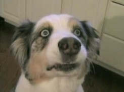 freaked-out-dog-300x225